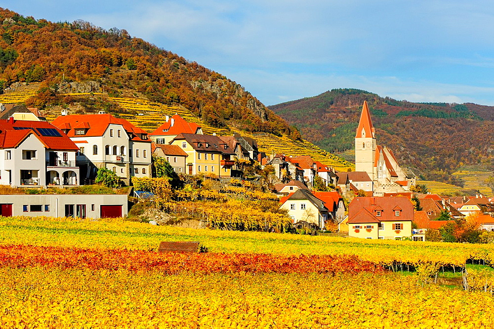 Austrian World Heritage Wachau in autumn, Austria, Lower Austria, Wachau, Weissenkirchen.