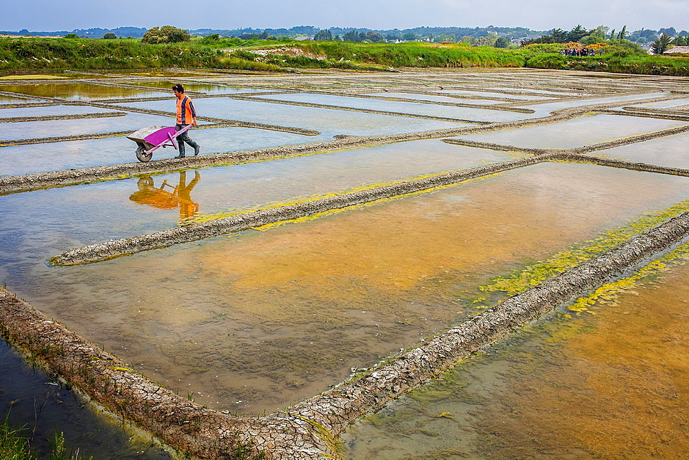 Man pushing wheelbarrow in the salt pans near Guerande, Loire-Atlantique, France.