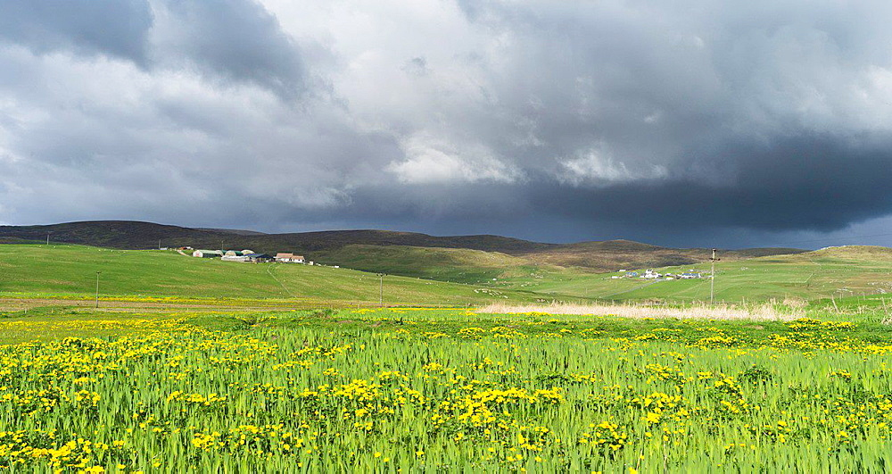 Landscape in North Roe, storm over Isbister in Northmavine. europe, central europe, northern europe, united kingdom, great britain, scotland, northern isles,shetland islands, May.