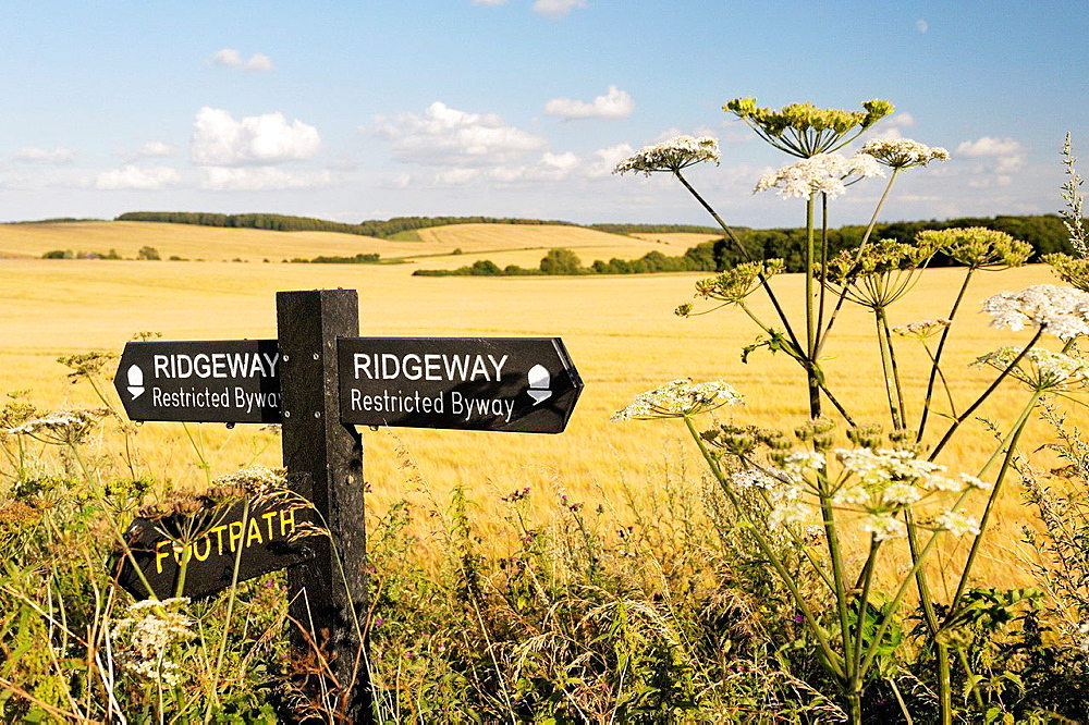 The Ridgeway. Sign on 5000 year old long distance path seen between Uffington Castle and Waylandís Smithy. Oxfordshire, England