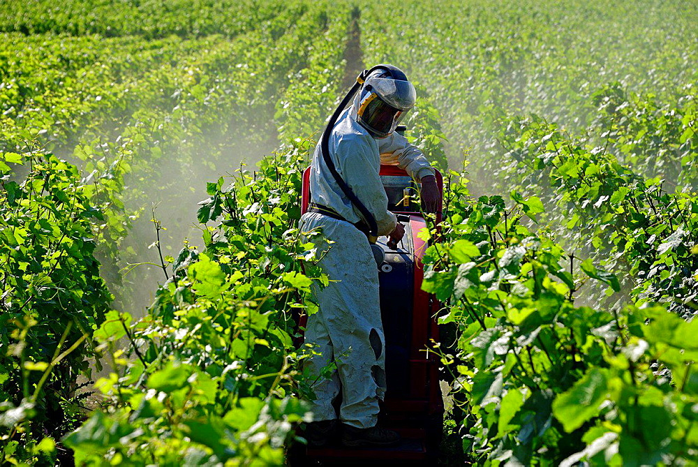 Preventive spray for pest in a vineyard, Beaune, Department of Cote d'Or, Burgundy, France, Europe.