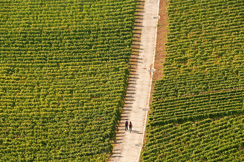 couple walking across vineyards, Lavaux vineyards, Unesco heritage, Swiss Riviera, canton Vaud, Switzerland, Lake Geneva shore.