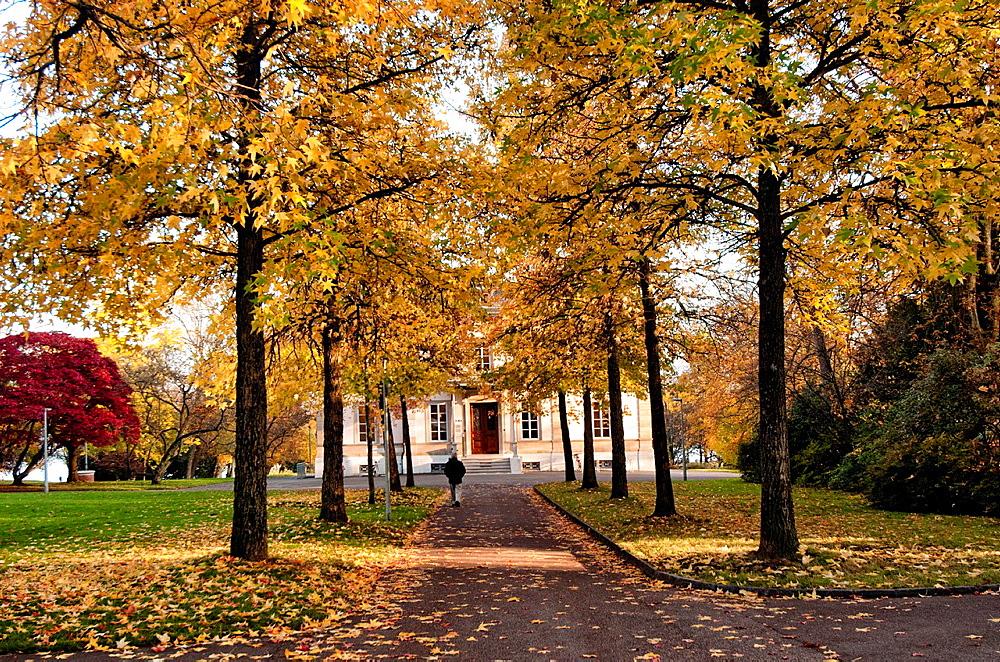 alley in Park ¥Perle du Lac¥ on Lake Geneva shore, autumn scene, Geneva, Switzerland