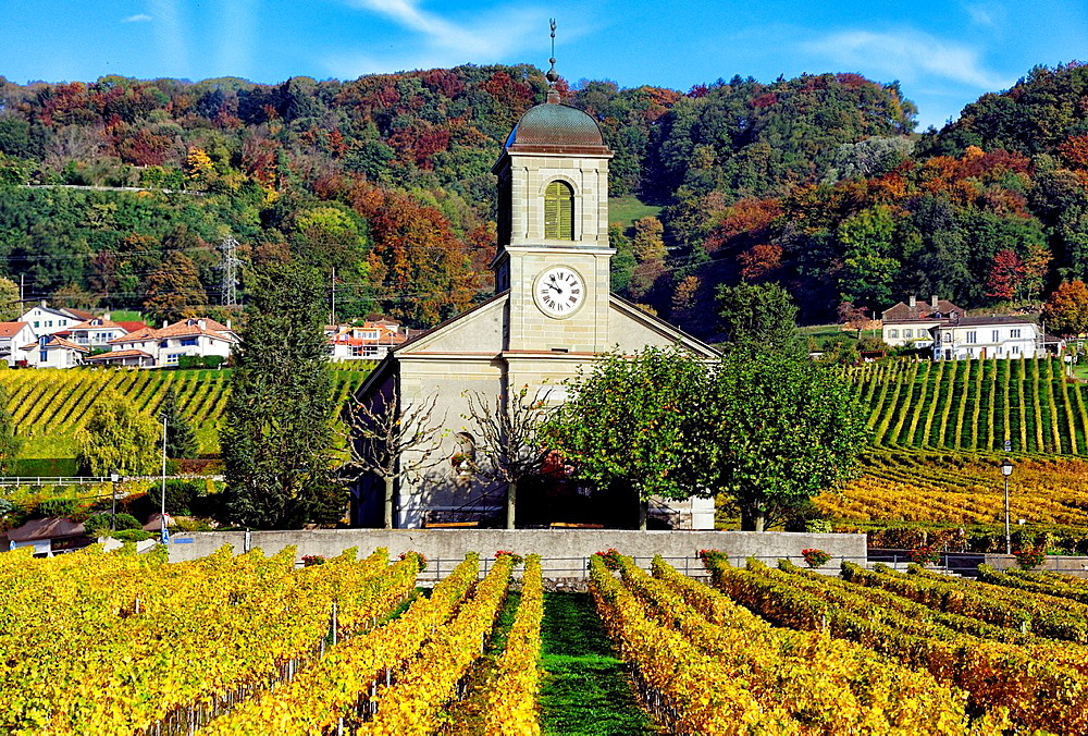 Church in foreground and houses in the background, village Mont-sur-Rolle , the area is famous for its wine-making, vineyards fields and wines with distinctive fizzy-fruit flavor , autumn scene, Romandy, French speaking part of Switzerland, district of