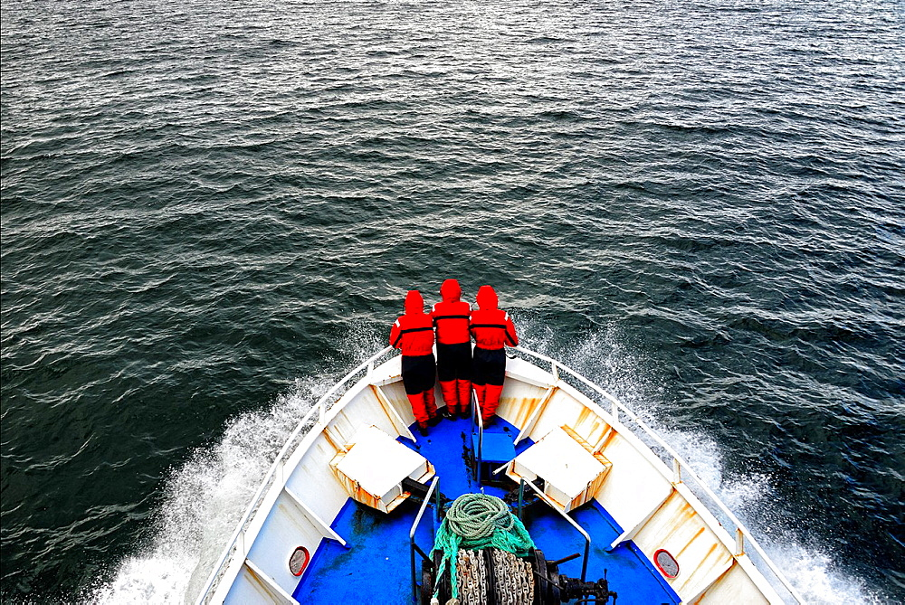 Whale watching cruise, Iceland.