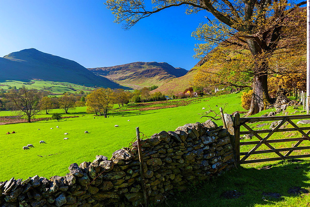 Keskedale Valley, Lake District National Park, Cumbria, England, UK, Europe.