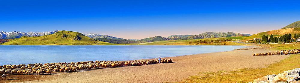 Shepherds & their sheep on the shotre of Lake Van, Turkey 6.
