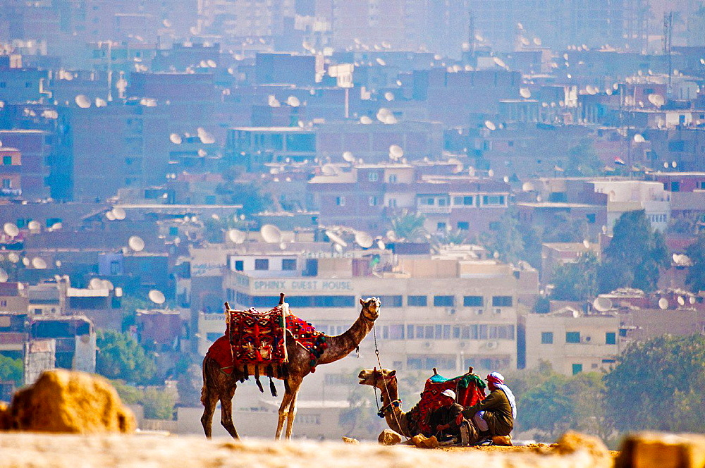 Camels resting in the city of Cairo in the background.