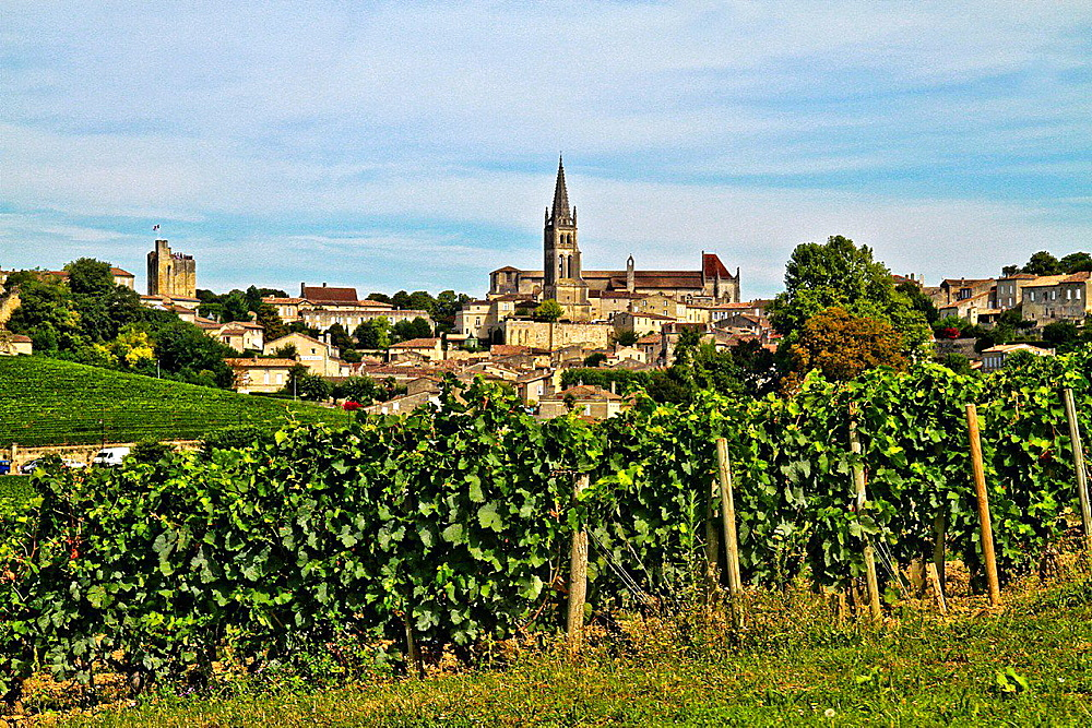 Vineyard of Saint-Emilion, Gironde, France, Europe.