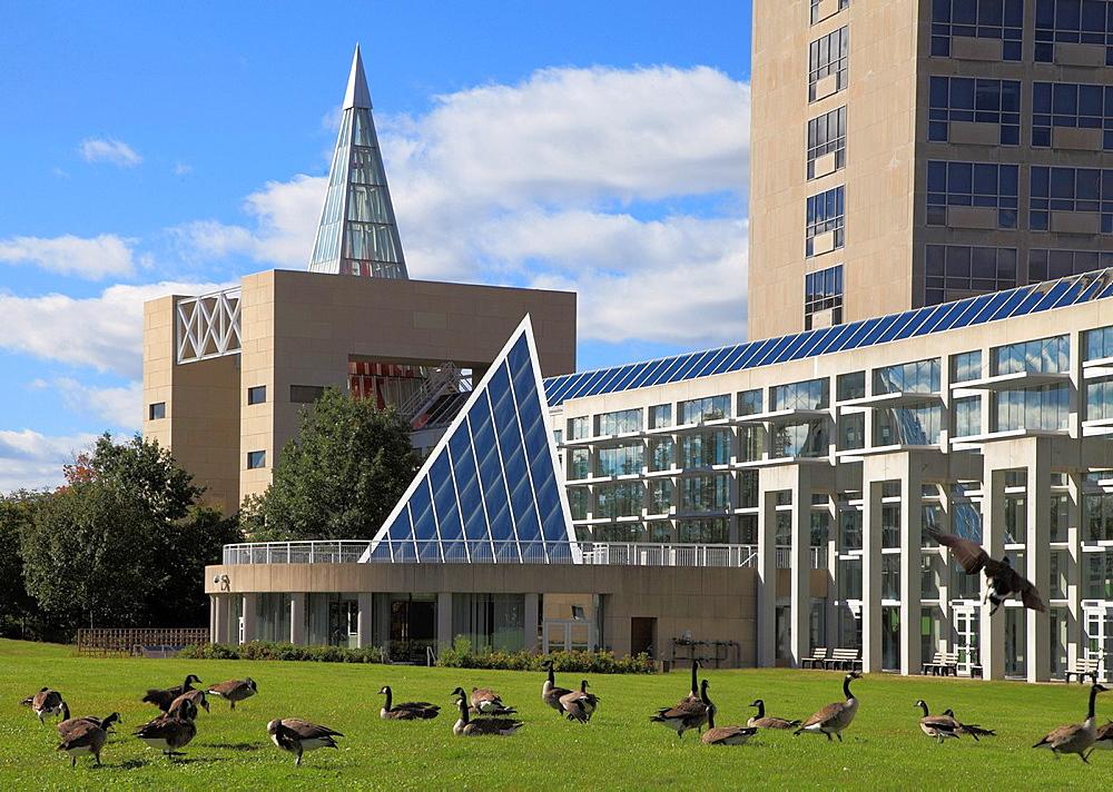 Canada, Ontario, Ottawa, City Hall, Canada geese,.