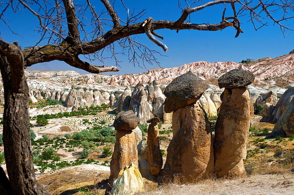 Fairy Chimneys in Pasabagi. cavusin, Cappadocia, Central Anatolia, Turkey.