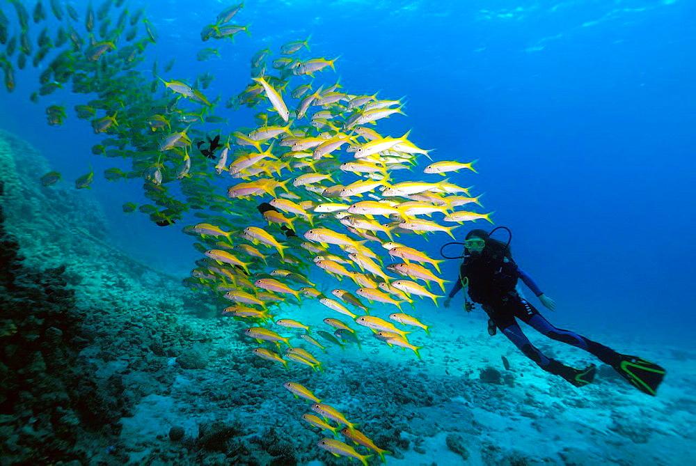yellowfin goatfish (Mulloidichthys vanicolensis).