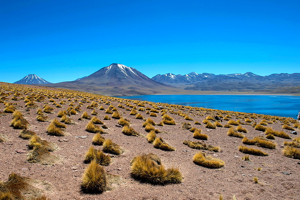 View of Miscanti volcano 5640 m (18,504 ft.) and Miscanti lagoon in the Los Flamencos National Reserve near San Pedro de Atacama in the Atacama Desert, northern Chile.