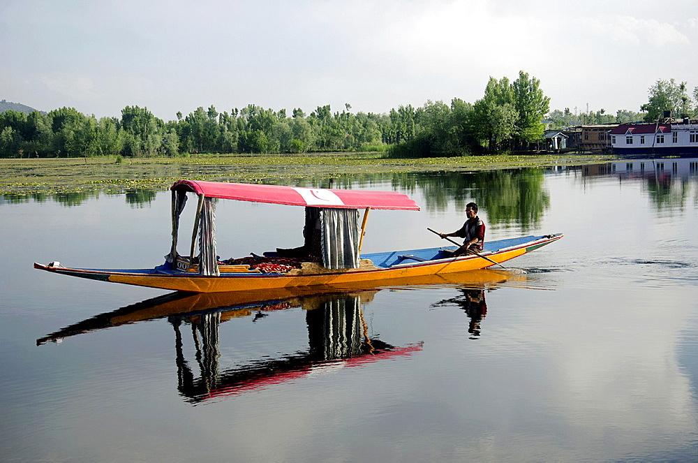 Shikara or house boat in Nageen lake, Srinagar, Jammu & Kashmir, India. - 817-463189