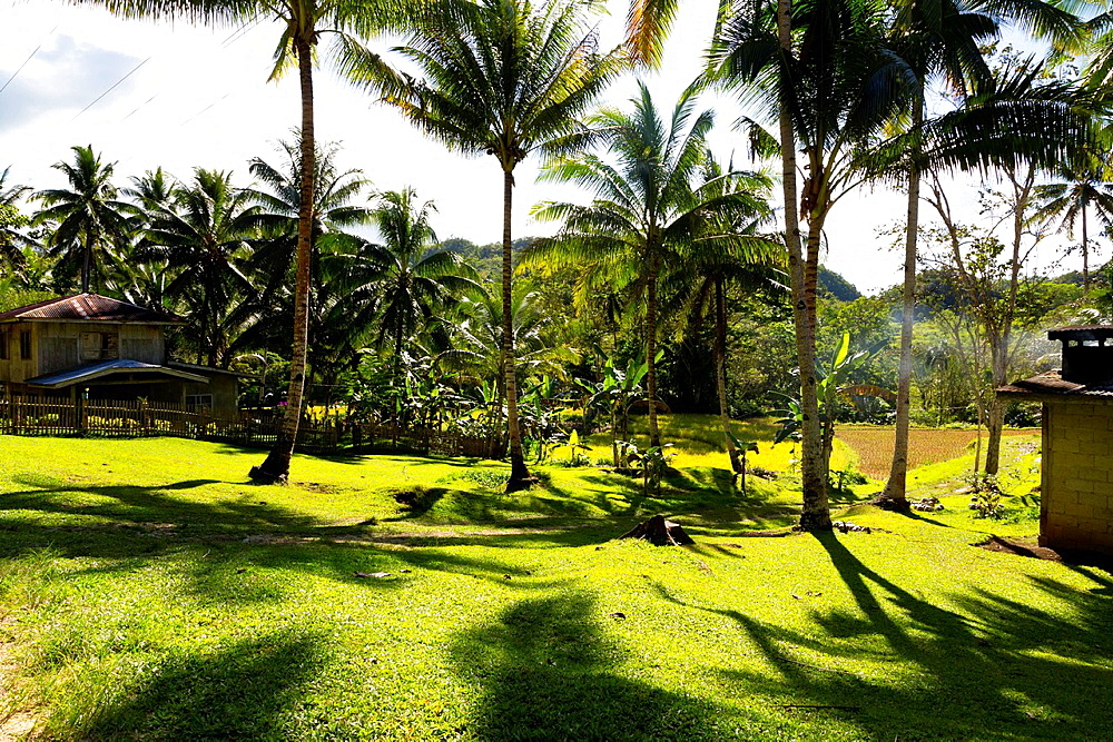 Tropical Landscpe in the Countryside on Bohol Island, Phillipines.