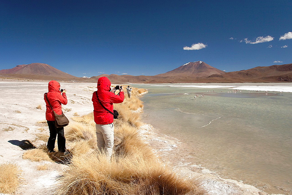 Visitors taking photos of the flamingos on Laguna Hedionda, Salar de Uyuni, Southern Altiplano, Bolivia.