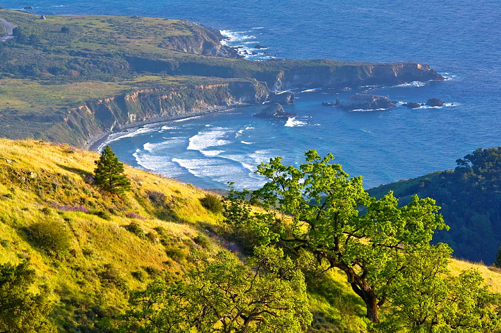 Oak trees and green hills in Spring over the ocean, Ventana Wildernes, Los Padres National Forest, Big Sur coast, California Oak trees and green hills in Spring over the ocean, Ventana Wildernes, Los Padres National Forest, Big Sur coast, California.