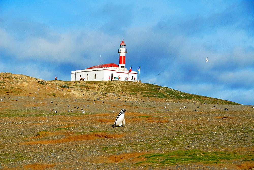 Magdalena Island, Strait of Magellan, Chile