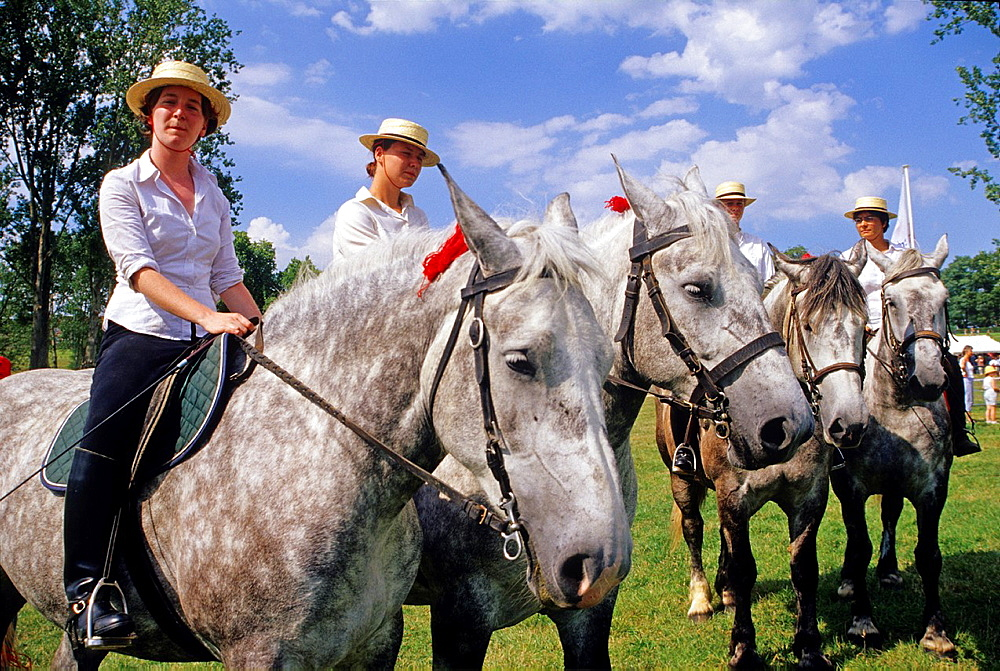 riders on Percherons, Haras du Pin, Le Pin -au-Haras, Orne department, Lower Normandy region, France, Western Europe.