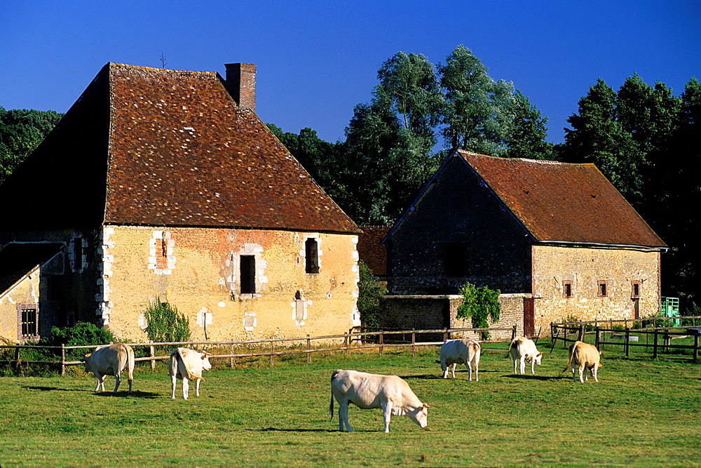 Regional Natural Park of Perche, Orne department, Lower Normandy region, France, Western Europe.