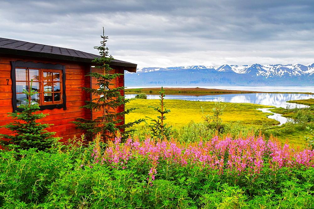 Hut and Dwarf Fireweed flowers (Epilobium latifolium or Chamerion latifolium) in Skjalfandi bay. Husavik. Iceland, Europe.