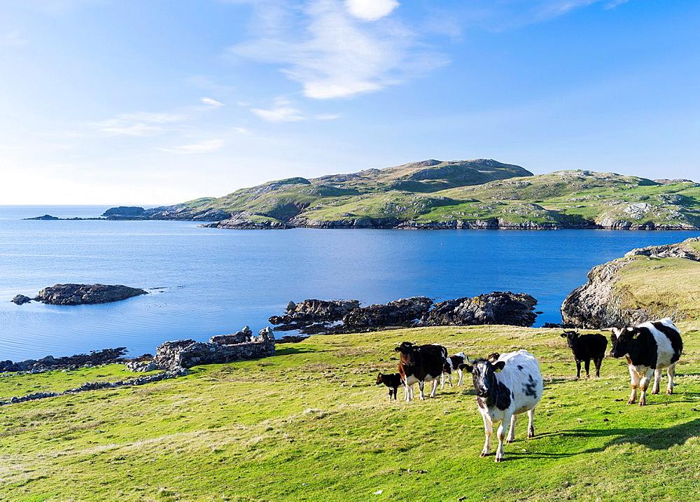 Landscape on West Shetland.coastline of the West Burra Firth. Europe, Great Britain, Scotland, Northern Isles, Shetland, May.