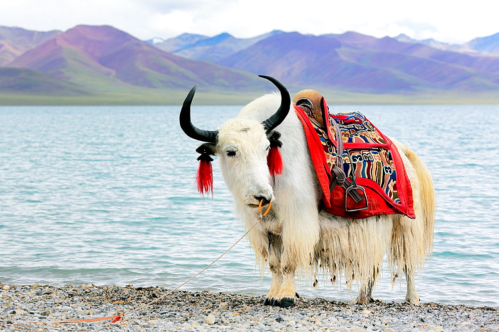 Namtso Lake (Nam Co), Tibet, China.
