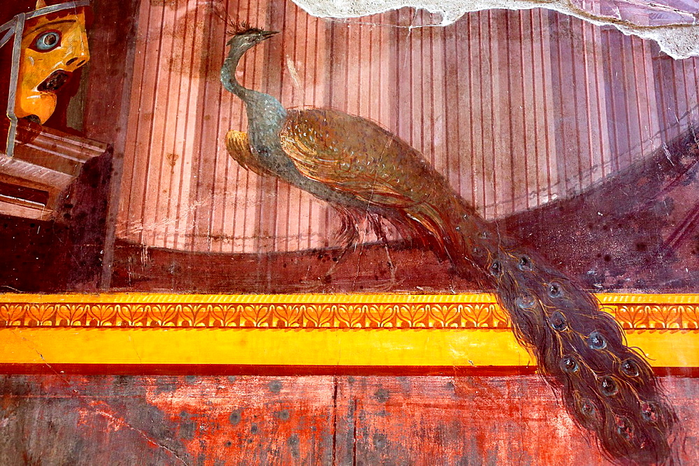 Peacock, Mural painting, Villa Oplontis, Torre Annunziata, Campania, Italy.