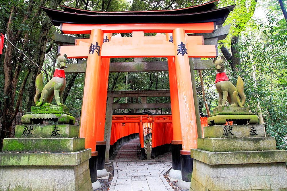 Japan, Kyoto, Fushimi Inari Taisha Shrine, torii gates,.