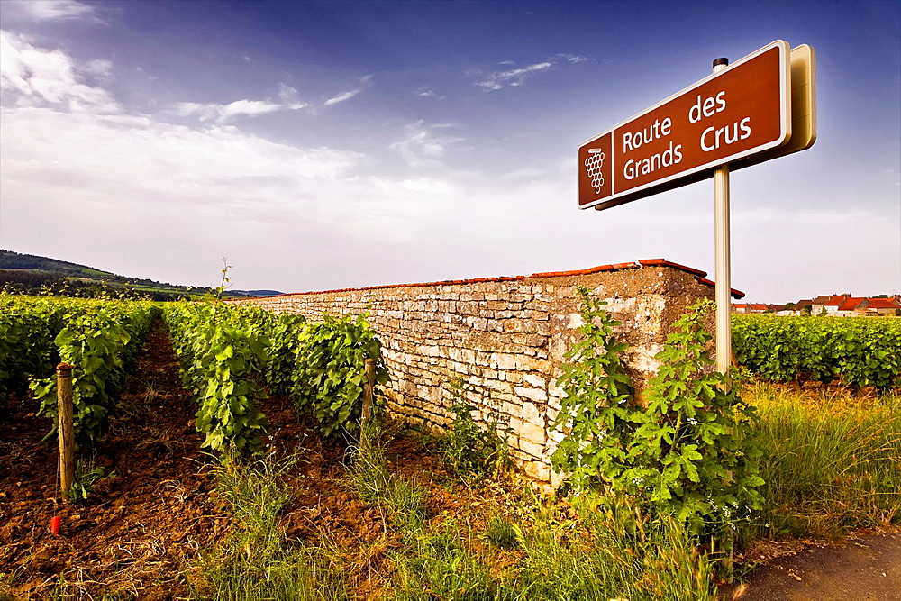 domaine olivier leflaive in puligny-montrachet.