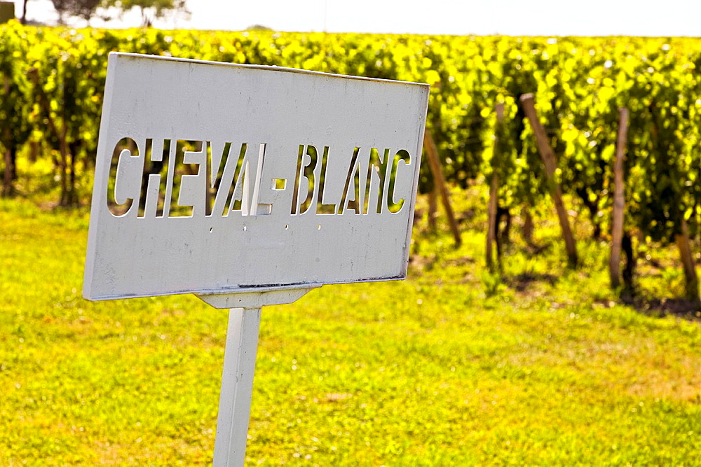 cheval blanc vineyards in pomerol