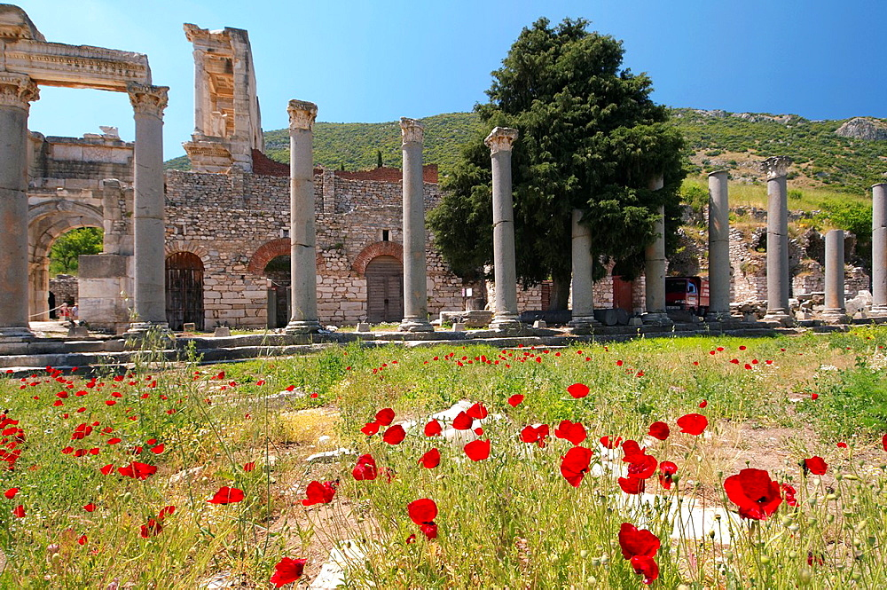Antique city of Ephesus, poppy flowers in front, Turkey, Western Asia.