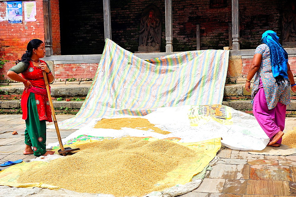 Women spreading rice to dry, Changunarayan, Kathmandu Valley, Nepal
