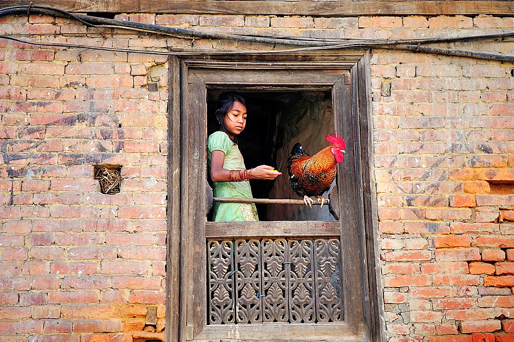 Little girl feeding a rooster in a window, Bhaktapur, Nepal