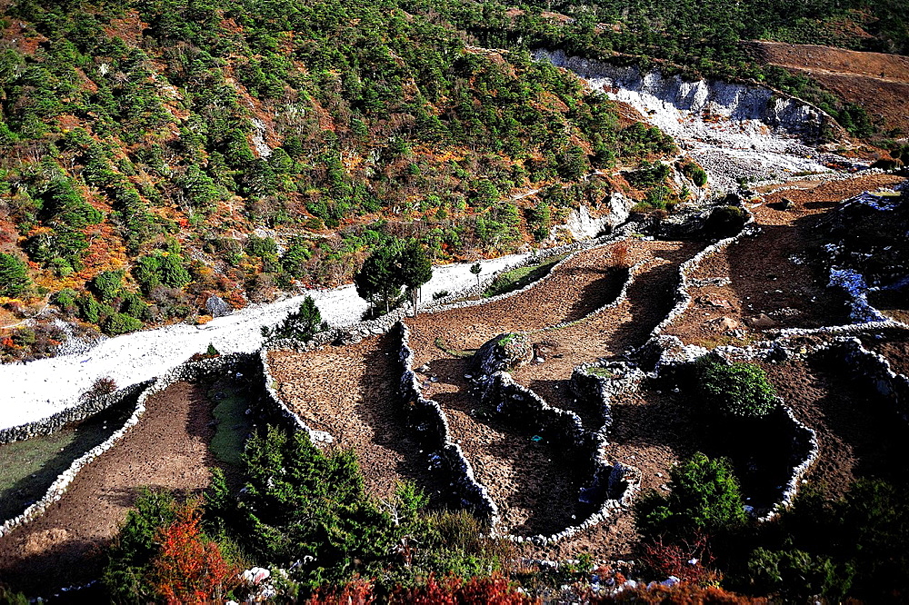 Farming terraces in the Imja Khole valley, Sagarmatha National Park, the Himalaya range, Khumbu area, Solukhumbu District, Sagarmatha Zone, Nepal