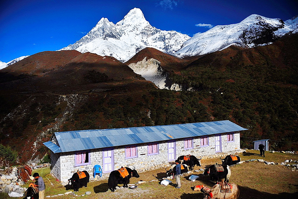 Ama Dablam Peak, 6.812 mts., raises over Pangboche village, Sagarmatha National Park, the Himalaya range, Khumbu area, Solukhumbu District, Sagarmatha Zone, Nepal