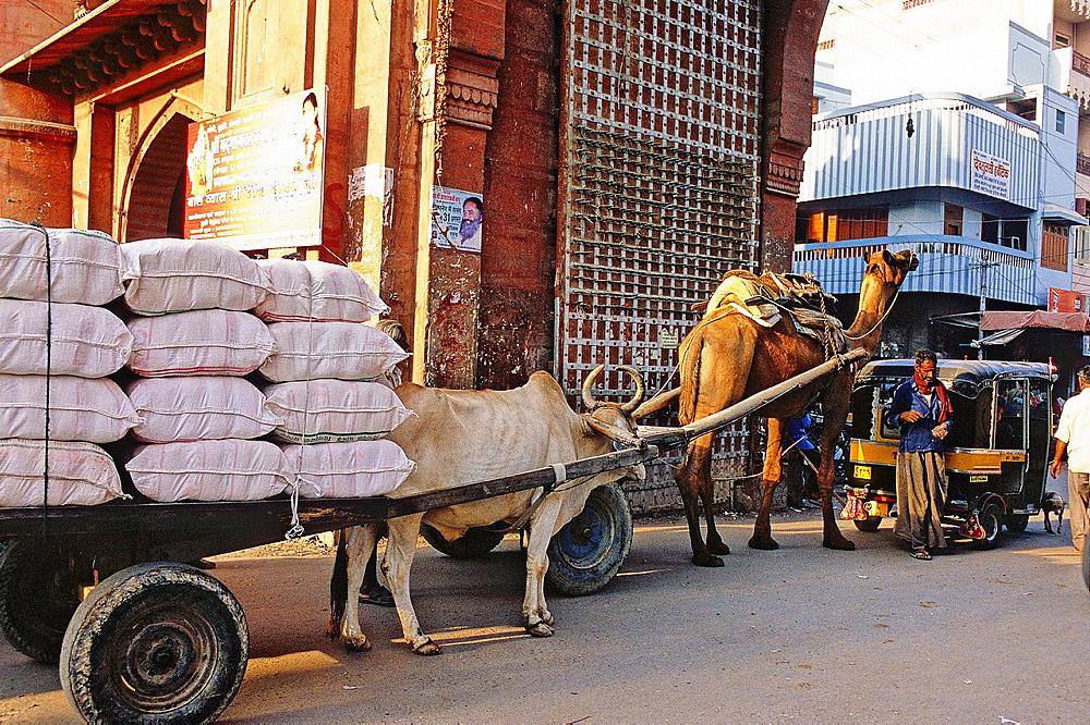 Traffic jam at Kote Gate, Bikaner, Rajasthan state, India