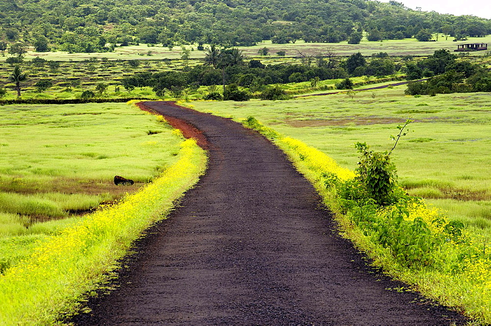 A scenic road in a village near Ratnagiri city, Maharashtra, India.