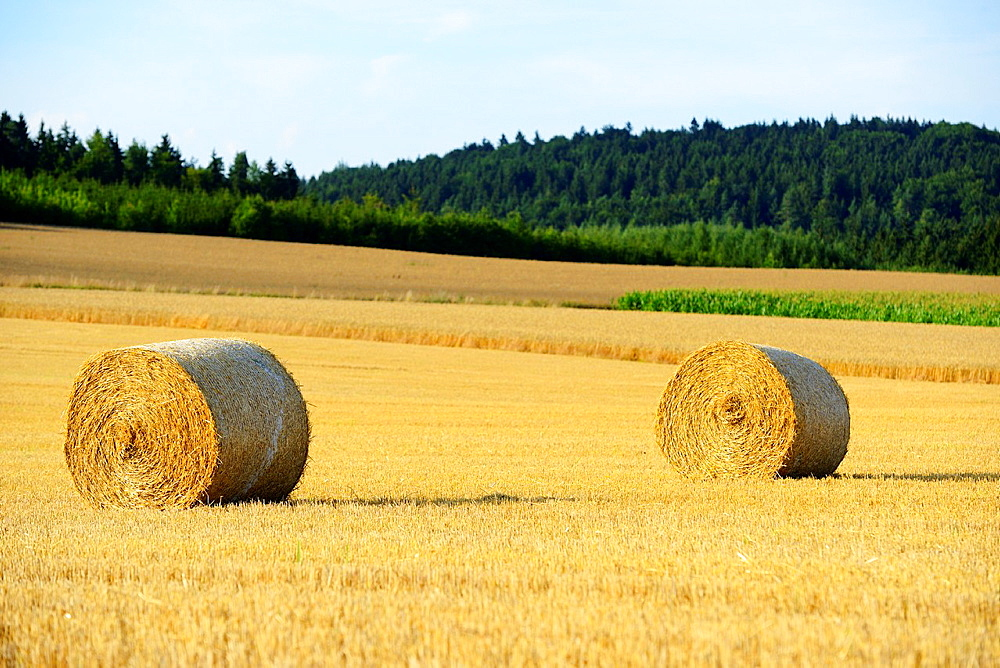 Hay bales lying on a cornfield, Germany - 817-472090