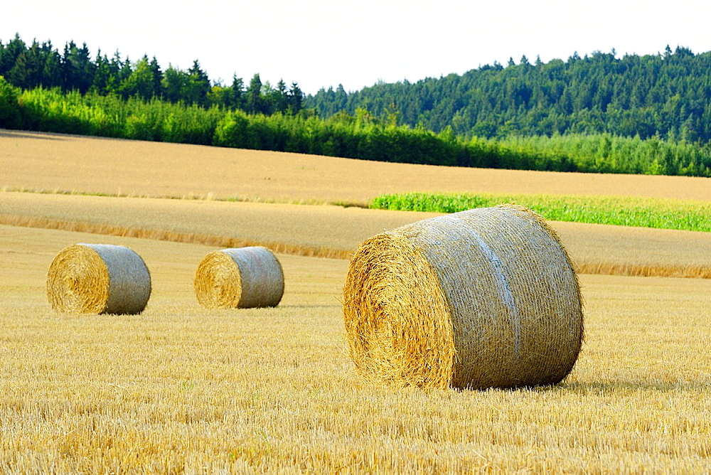 Hay bales lying on a cornfield, Germany - 817-472091