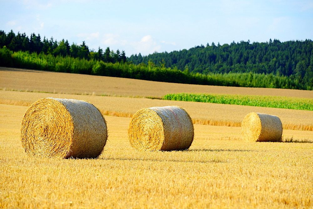Hay bales lying on a cornfield, Germany - 817-472093