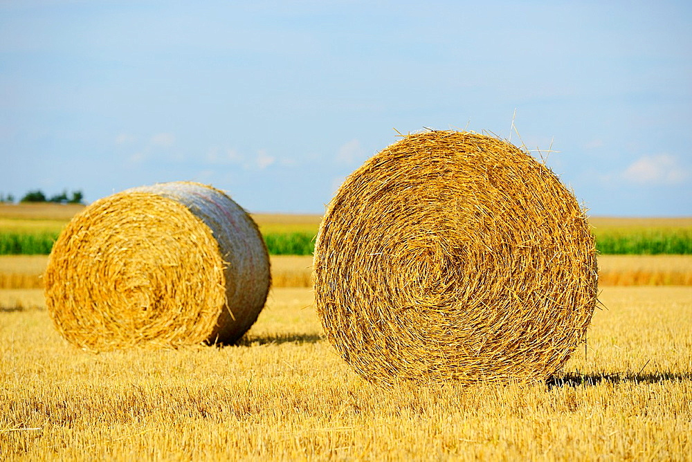 Hay bales lying on a cornfield, Germany - 817-472094