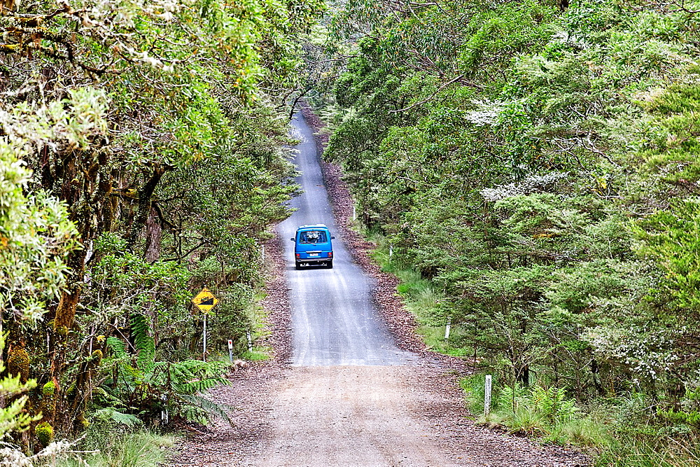 Van on the road at the New England National Park, New South Wales, Australia - 817-472182