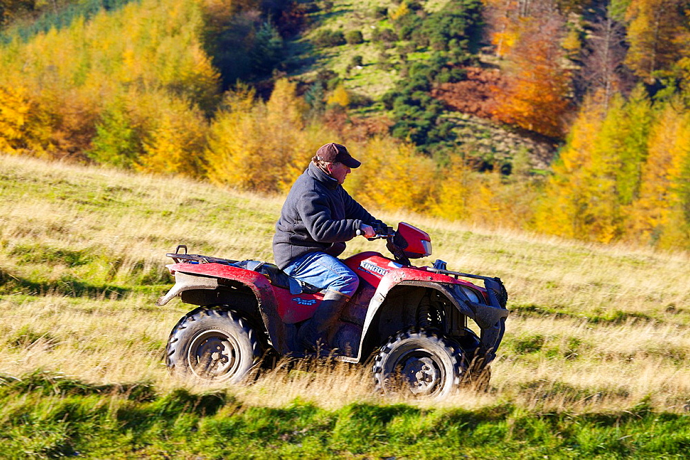 Farmer on Quad Bike with woods in background. Autumn. - 817-472197