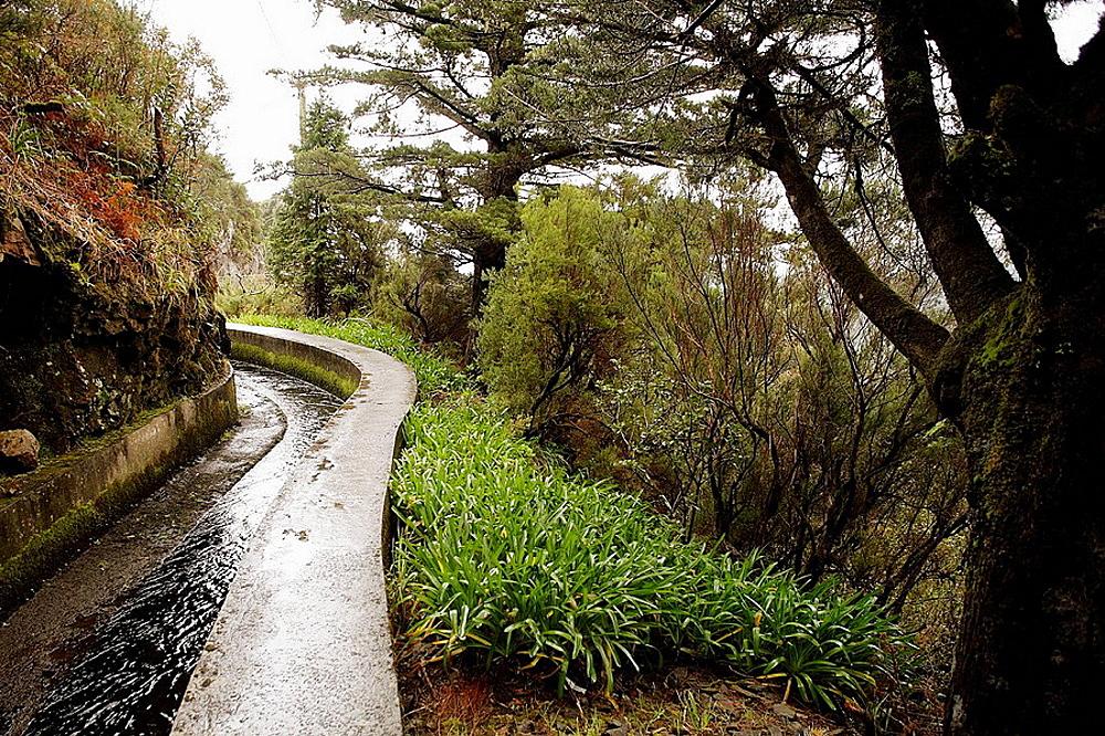 'Levada' walk, Madeira, Portugal