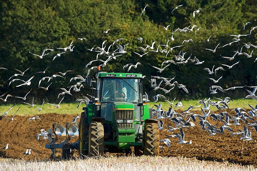 Ploughing, Buckinghamshire, England.