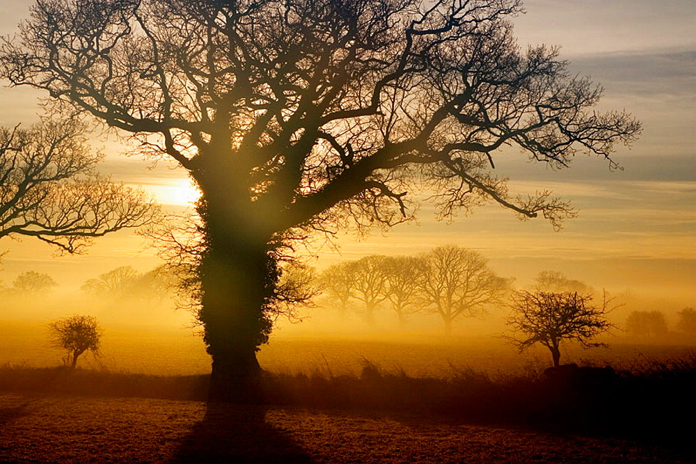 North Norfolk, East Anglia, UK.
