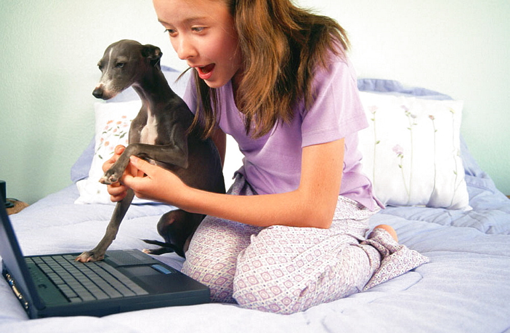 Teen girl & her Italian Greyhound work on laptop