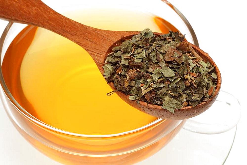Heiltee aus Haselwurz, Asarum europaeum, Krautertee / medicinal tea made of Asarabacca, Hazelworth, Asarum europaeum