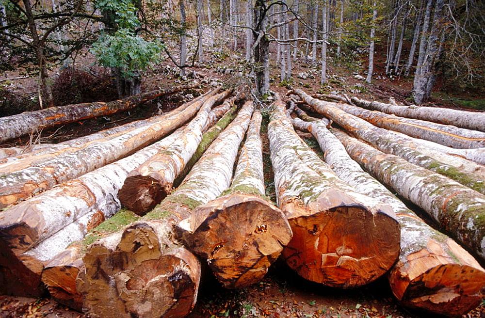 Deforestation, Irati Forest, Navarre, Spain - 817-65231